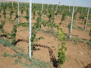 Столбики для винограда