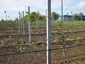 Столбики для винограда Jltccf